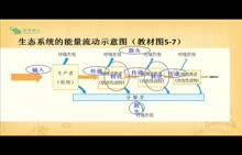 人教版 高二生物 必修三 第5章 第2節 生態系統的能量流動-視頻微課堂(王志娜)