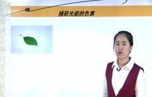 人教版 高一生物 必修一 5.4捕获光能的色素-视频微课堂(王志娜)
