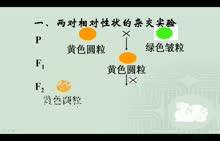 人教版 高一生物 必修二 1.2孟德尔的豌豆杂交实验(二)-视频微课堂