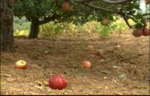 人教版 八年级物理下册 重力-视频素材