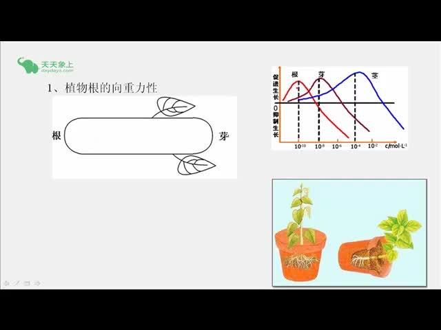 人教版 高二生物 必修三 第3章 第2节 生长素的生理作用-视频微课堂(王志娜)