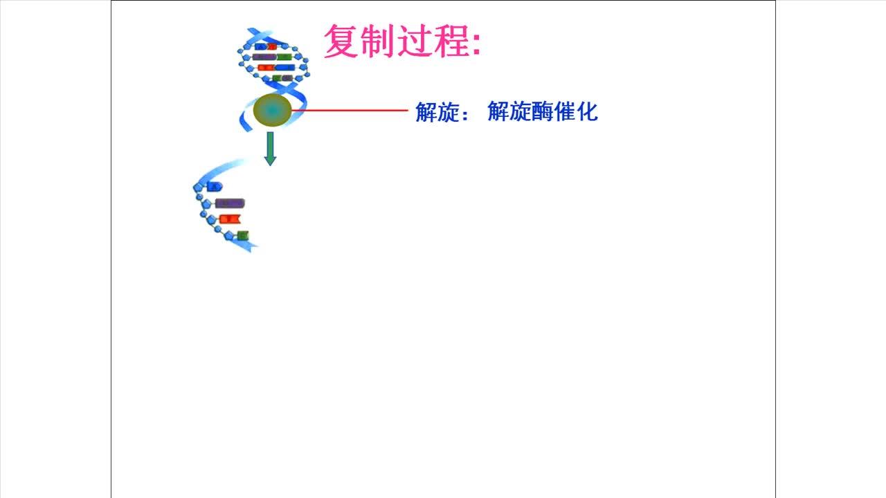 苏教版 高一生物 必修二 4.2 DNA分子复制过程-视频微课堂