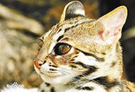 北京发现多种罕见动植物 物种多样性出人意料