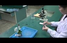 河南2018中考生物实验--12用显微镜观察叶片的下表皮细胞(视频)