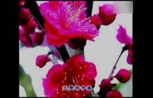 部编版 八年级语文下册:4.卜算子·咏梅-视频素材