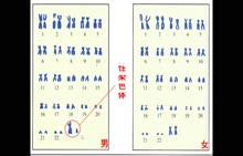 人教版 八年级下册 生物-性别的遗传太原51中李晓军-微课