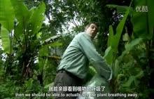 人教版七年级生物第三单元水循环 植物的蒸腾作用-视频素材