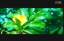 生态系统的组成-视频素材