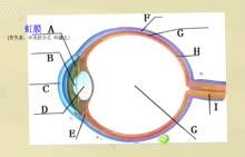 微课视频--眼睛的结构视频