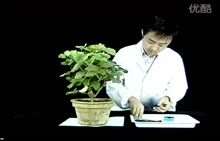苏教版 七年级生物上册 实验15 绿叶在光下制造淀粉-实验演示视频