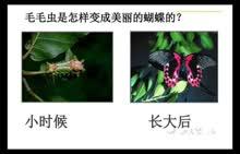 人教版 八年级 生物《家蚕的生殖和发育》-微课堂视频