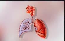 人教版 七年级生物下册 第四单元 第三章人体的呼吸 第一节 呼吸道对空气的处理-呼吸系统的组成与功能-视频素材