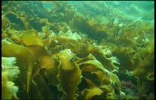 人教版生物七年级上册 专题讲解 藻类植物-视频微课堂