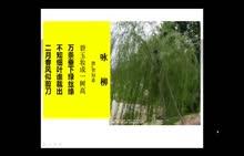人教版生物七年级上册 专题讲解 枝条是由芽发育而成的-视频微课堂