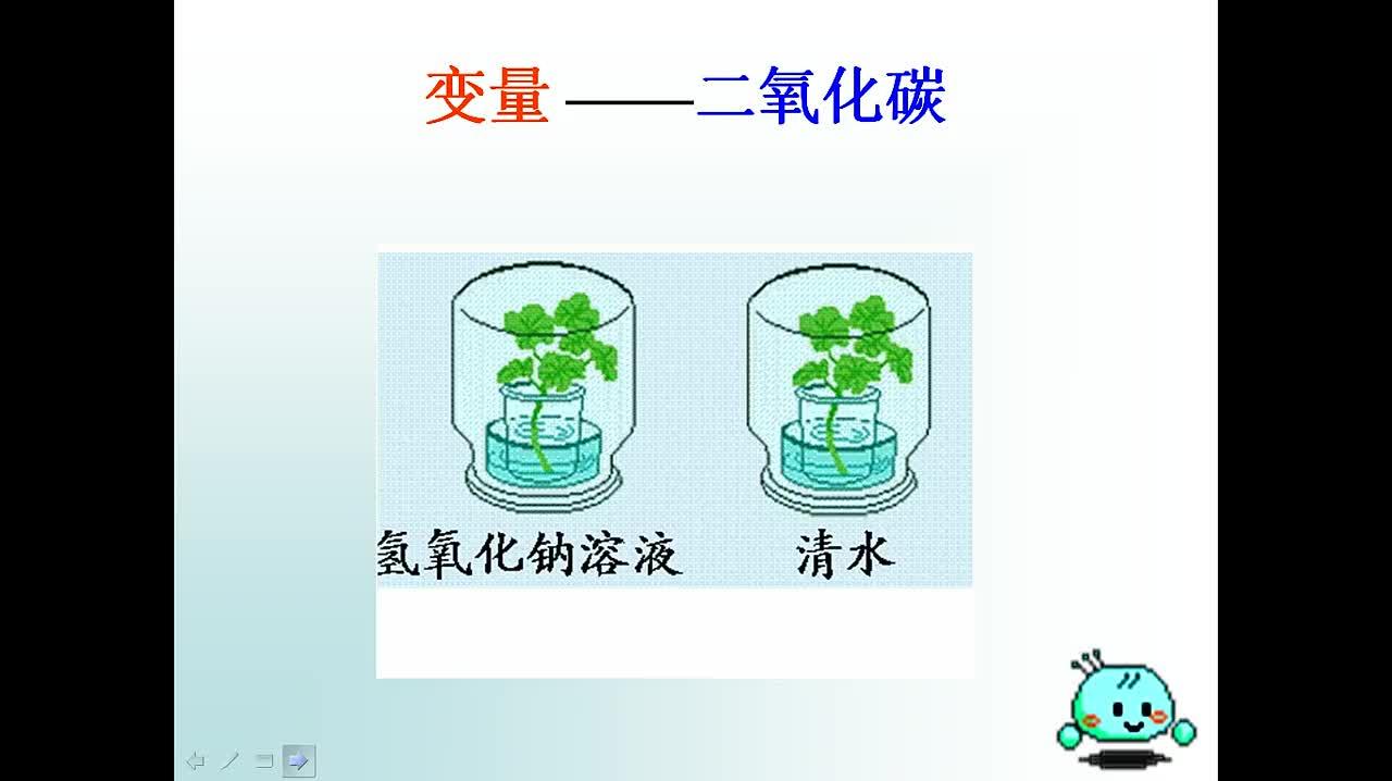 人教版 生物中考复习 植物三大生理活动