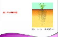 济南版 八年级生物上册 第四单元 1.5根的结构和功能-视频微课堂