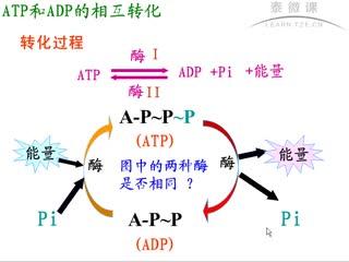 """人教版 高一生物 必修一 5.2.细胞的能量""""通货""""——ATP  ATP与ADP的相互转化-视频微课堂"""