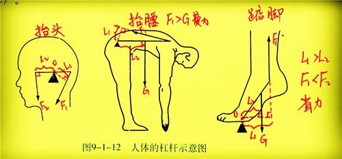 看人体网站_我们看上面人体的杠杆示意图中的第三个,\