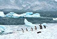 研究显示人长期居住在南极洲后大脑缩小
