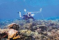 """珊瑚靠发出声音吸引鱼类""""管家""""?"""