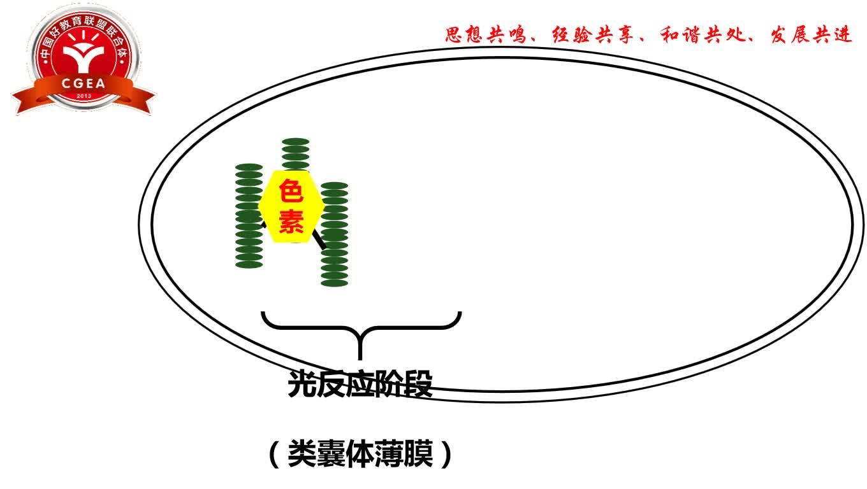 人教版 高一生物 必修一 5.4能量之源—光與光合作用(2)——光合作用的原理和應用-視頻微課堂