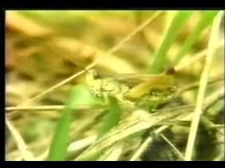 人教版 八年级生物下册 7.1.2蝗虫的生殖和发育-视频素材