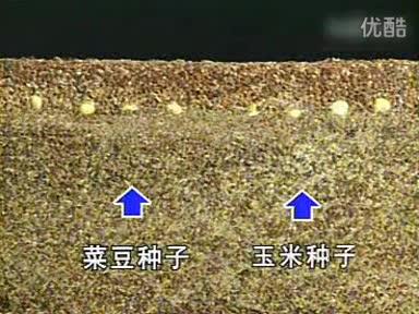 浙教版七年级科学下册第一章  第4节 植物的一生-种子的萌发过程-视频素材