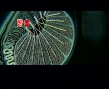 浙教版 七年级科学下册 1.1新生命的诞生-生殖系统-视频素材