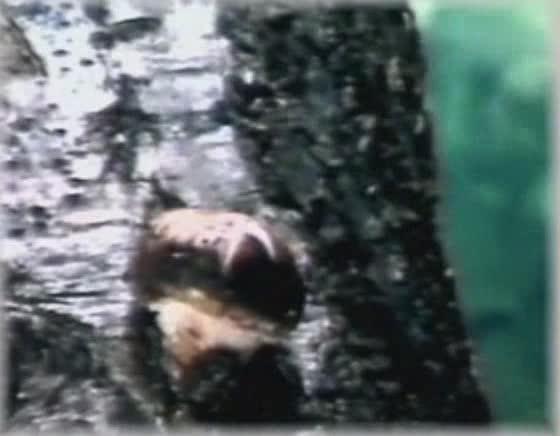 浙教版七年科学下册第1章第6节细菌和真菌的繁殖 第2课时(素材:蘑菇的结构与生活)-视频素材