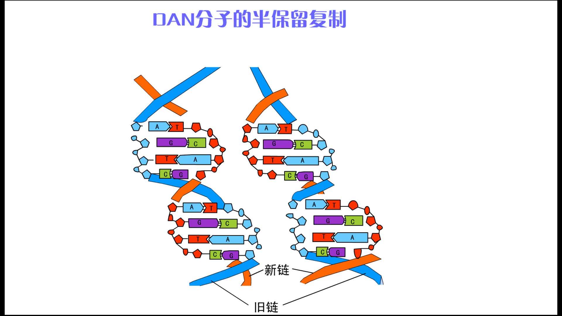 DNA分子的半保留复制-视频素材