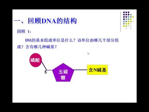 人教版 高一生物 DNA分子的多样性-视频微课堂