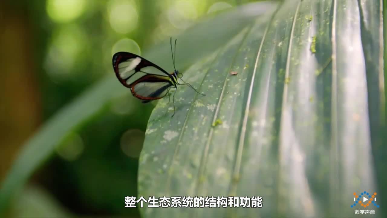 14-1-3 生態系統穩定嗎-【科學聲音】七年級下冊科學微課視頻(滬教版)