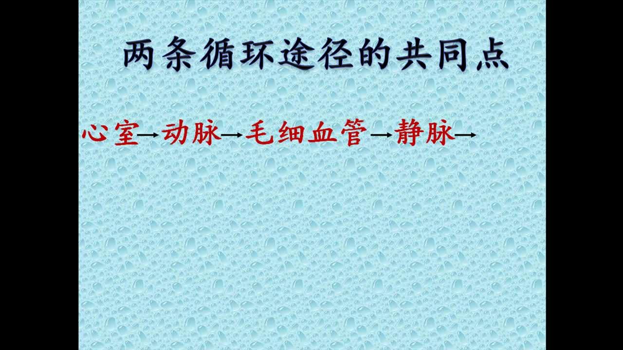 人教版 七年级生物下册 第四单元 第四章 第三节 血液循环系统潘文广-视频微课堂