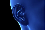 科学家实现体内3D打印人耳