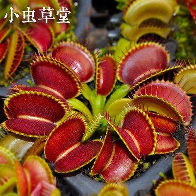 """植物爱上吃肉 或是环境逼出来的""""重口味"""""""