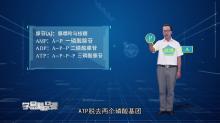 """课程介绍: ATP在能量代谢中的作用这一考点在考试大纲说明中要求为Ⅱ类要求。本节课侧重讲解ATP的结构式、ATP的结构简式、ATP中的高能磷酸键、ATP的功能等知识点。ATP的知识常与光合作用和细胞呼吸等生命活动过程相结合进行考查。 讲师介绍: 赵春涛,中学一级教师,执教13年、6年高三任教;市骨干教师、市课改""""先进个人"""",东三省""""十佳生物教师"""";市新课程改革教学大赛特等奖、市烛光杯特等奖,省级课例展示一等奖,十三、十五届全国学术年会教学案例展示一等奖;省学业水平测试命题员,省、市模拟考试命题员,教师资格证考试面试评委;工作研究方向主攻学生学习方法研究、教学策略研究、概念教学研究、概念图与思维导图研究,微课研究与翻转课堂教学的实践者,国家微课大赛三等奖。[来自e网通客户端]"""