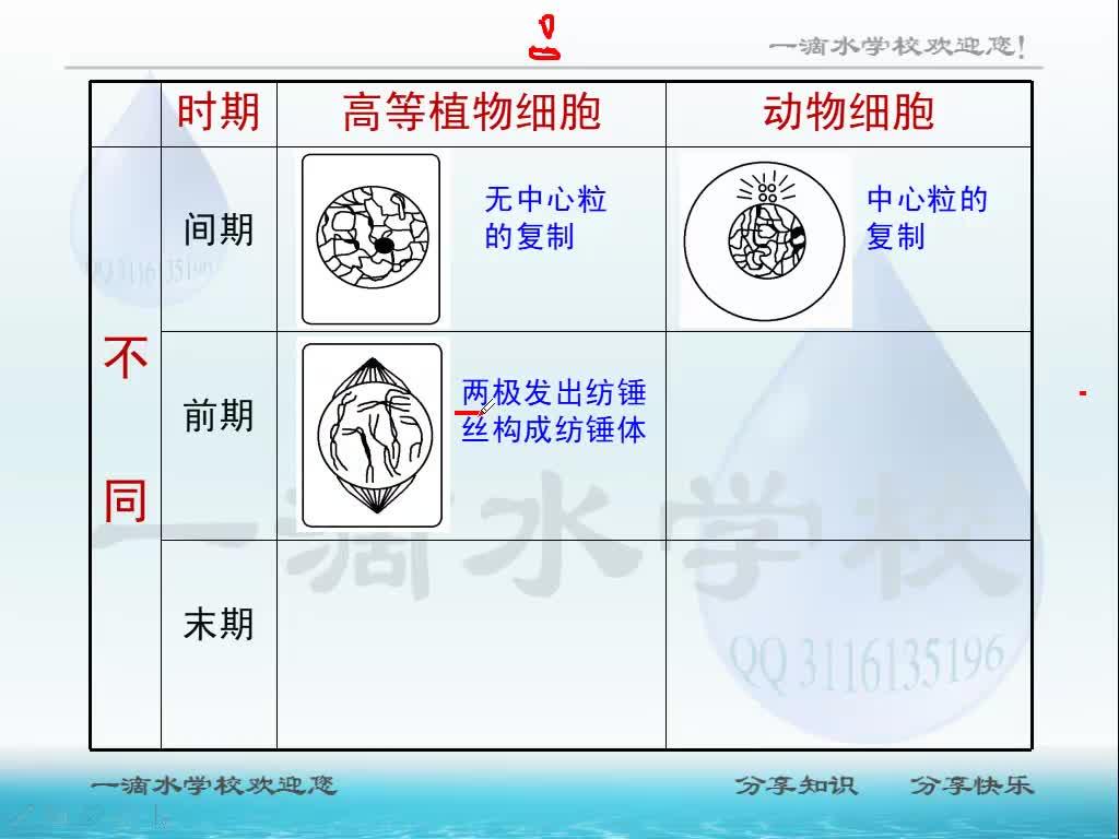 视频6.1.3 有丝分裂图像识别-高中生物人教版必修1【一滴水】