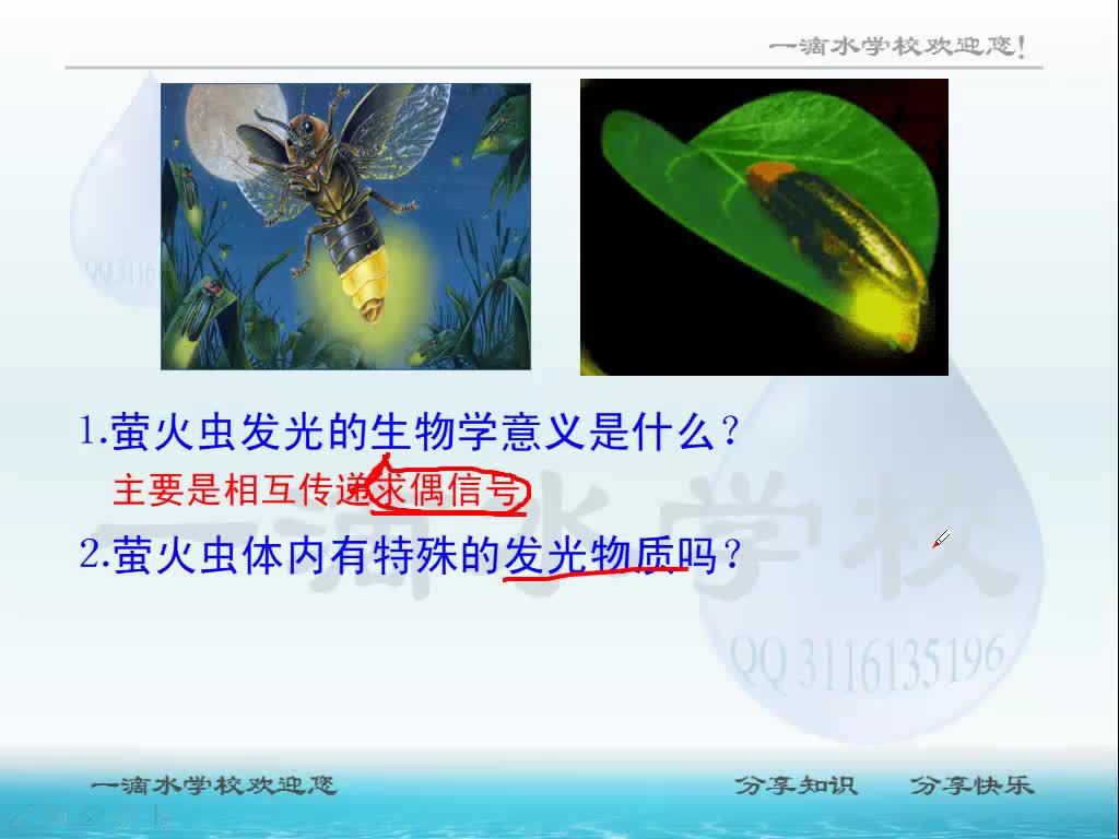 视频5.2.1 细胞中的能量通货--ATP-高中生物人教版必修1【一滴水】