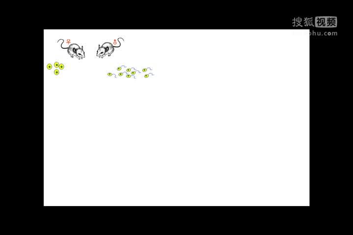 """人教版 八年级生物:转基因鼠的启示""""-视频微课堂"""