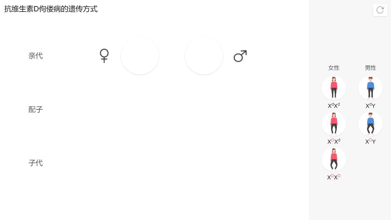 2.3 抗维生素D佝偻病的遗传方式-【火花学院】人教版必修二高一生物 伴性遗传 第二章 基因和染色体的关系 第三节 伴性遗传 [来自e网通客户端]