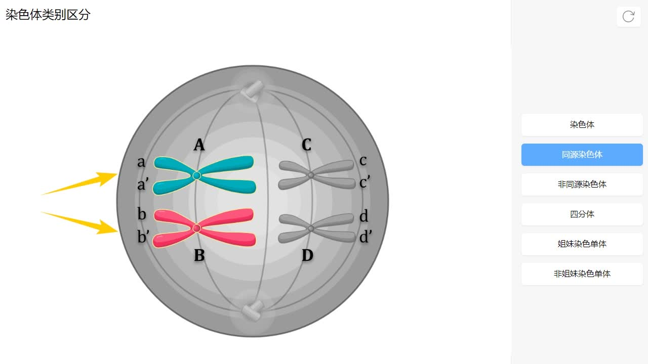 2.1 染色体-【火花学院】人教版必修二高一生物 减数分裂 第二章 基因和染色体的关系 第一节 减数分裂和受精作用 [来自e网通客户端]