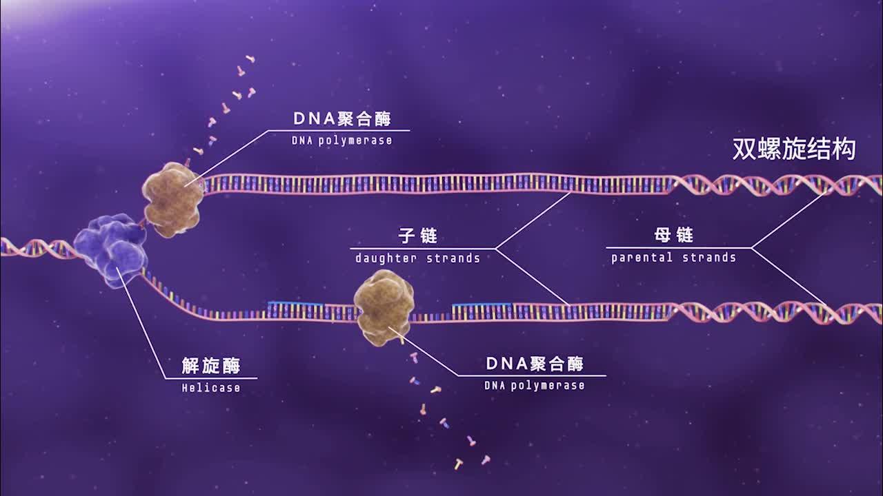 遗传与进化-基因的本质-DNA分子复制的过程 3.3 DNA分子复制的过程-【火花学院】人教版必修二高一生物 第三章 基因的本质 第三节 DNA的复制 [来自e网通客户端]