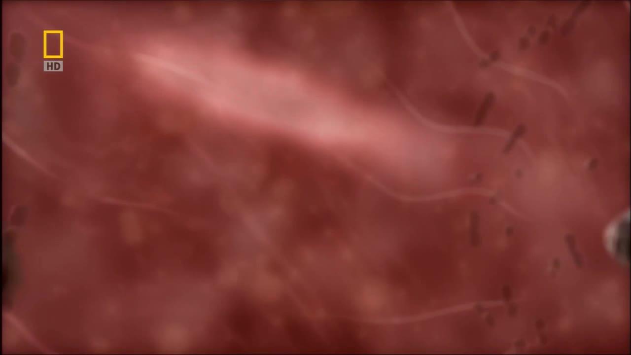人教版高二选修三3.1体内受精和早期胚胎发育视频素材视频来源于子宫日记,经音频和视频剪辑而成。时长10分钟,能让学生了解体内受精过程,胚胎发育的过程,以及同卵、异卵多胞胎的形成过程。[来自e网通极速客户端]