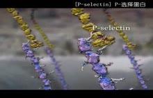 《细胞里的生命》视频素材(北师大版必修一,中文解说)    《细胞里的生命》视频素材(北师大版必修一,中文解说)    《细胞里的生命》视频素材(北师大版必修一,中文解说)[来自e网通客户端]