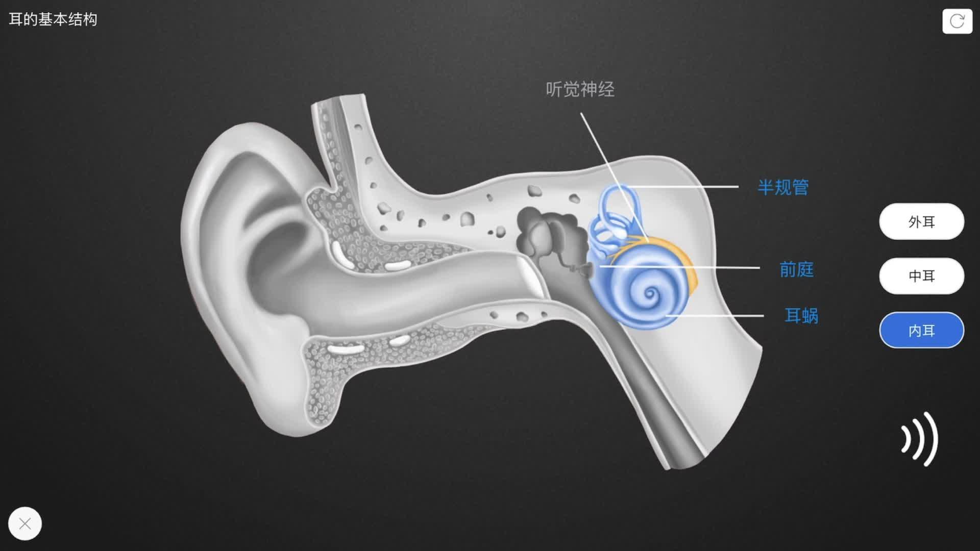 4.6.1 耳的结构-【火花学院】人教版七年级生物下册 人体的感官 第四单元 生物圈中的人 第六章 人体生命活动的调节 第一节 人体对外界环境的感知 [来自e网通客户端]