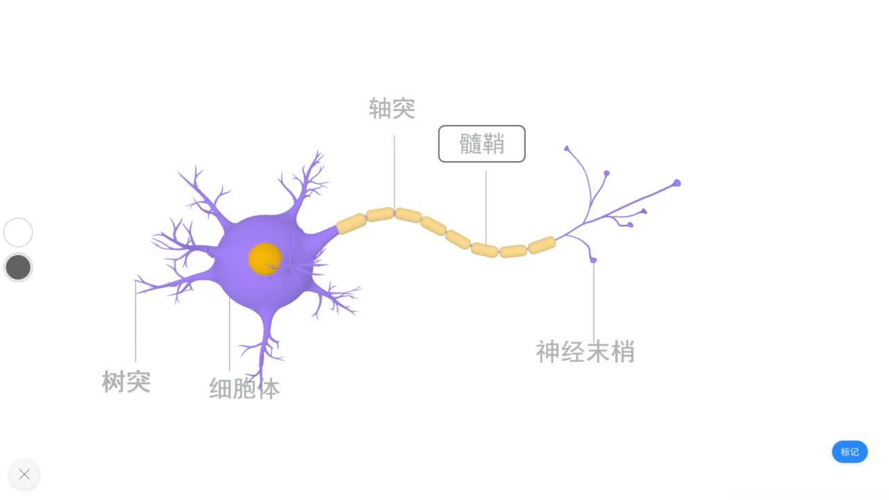 4.6.2 神经元-【火花学院】人教版七年级生物下册 人体的神经系统 第四单元 生物圈中的人 第六章 人体生命活动的调节 第二节 神经系统的组成 [来自e网通客户端]