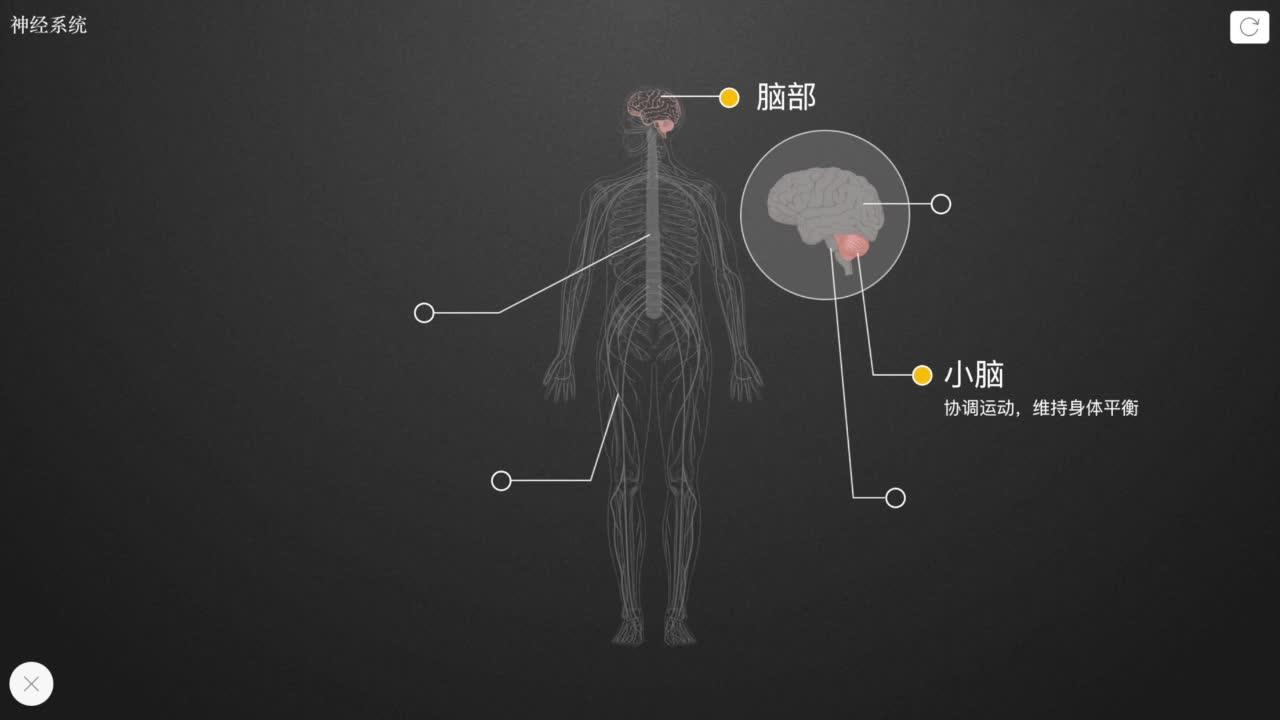 4.6.2 神经系统-【火花学院】人教版七年级生物下册 人体的神经系统 第四单元 生物圈中的人 第六章 人体生命活动的调节 第二节 神经系统的组成 [来自e网通客户端]