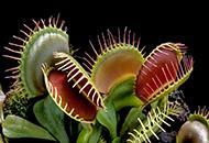 基因重组让植物也能吃肉
