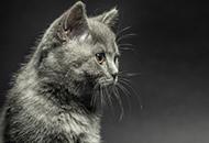猫科、犬科动物的眼睛为什么会在夜晚发光?