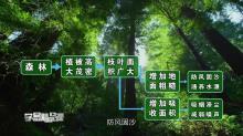 区域生态环境建设 森林的开发和保护--以亚马孙热带雨林为例 第一讲 森林与亚马孙热带雨林的环境效应